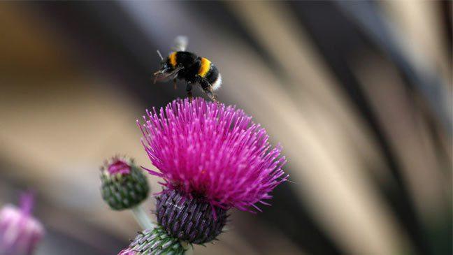 النحل كالبشر يعاني أحياناً من ذكريات وهمية