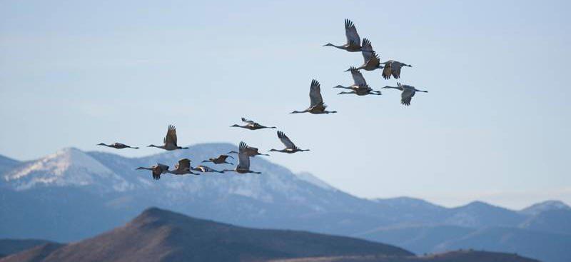كيف تجد الطيور مسارها? How Do Birds Find Their Way?