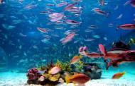 بالدولار.. سبر غور ثروات المحيطات