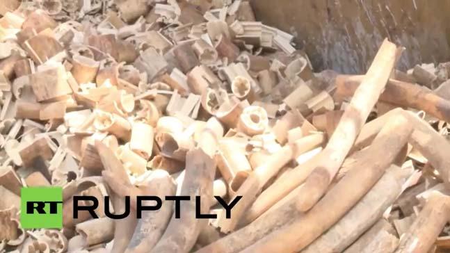 دفن 20 مليون دولار في التراب حفاظاً على الفيلة