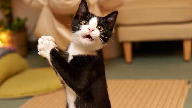 مشاهدة فيديوهات القطط قد تشفي البشر من بعض الأمراض