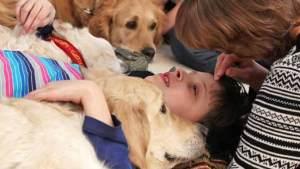 الكلاب تساعد في علاج المرضى