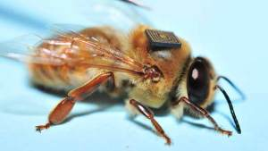 تناقص أعداد النحل يهدد البشرية.. هل تنقذنا التكنولوجيا؟