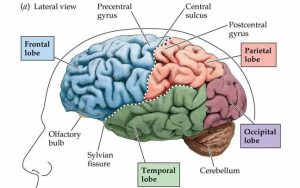 كيف ينتج الدماغ كل الذكريات ?