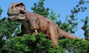 ذكور الديناصور كانت ترقد على البيض