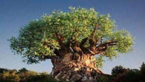"""""""شجرة الحياة"""" تضم نحو 2.3 مليون كائن حي"""