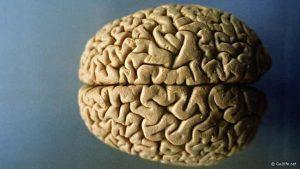 علماء يحصلون على خلايا الدماغ من خلايا الجلد