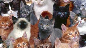 لعلماء يحددون العلاقة بين لون القطط وعدوانيتها
