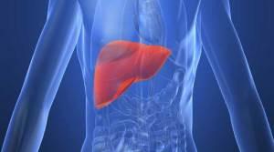 مشروب قادر على الوقاية من الإصابة بمرض تليف الكبد