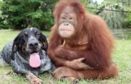 """""""بوصلة"""" في عيون الكلاب والقردة"""
