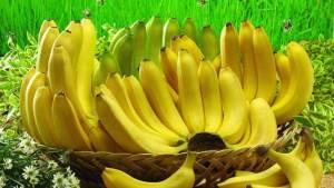 الموز مهدد بالاندثار