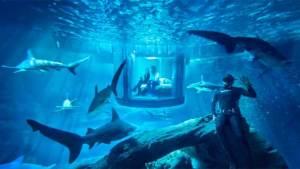 استمتع بقضاء ليلة مع أسماك القرش