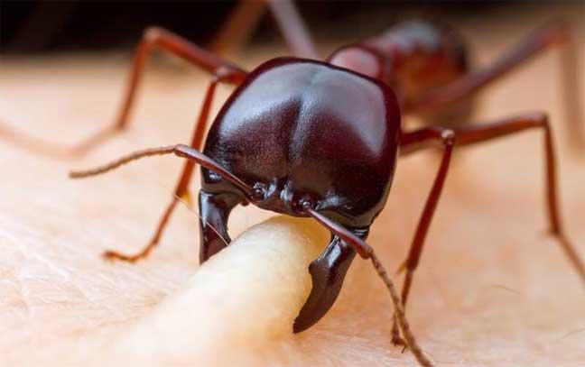 اذا قرصتك نملة .. اشكرها ولا تقتلها