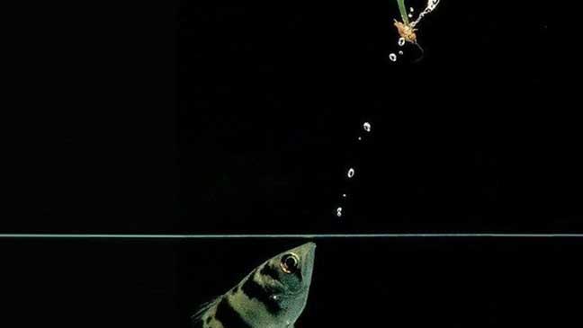 الأسماك يمكنها التعرف على وجوه الناس