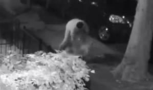 بالفيديو رجل يحاول اغتصاب امراة في منتصف الشارع