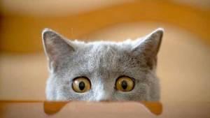 علماء يوضحون سبب رفض القطط تغيير طعامها