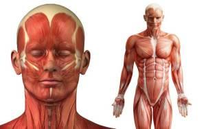 أشياء جديدة لم يكن أحد يعرفها أنها موجودة قي جسم الإنسان