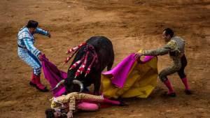 ما مصير الثور الذي يقتل مصارعه في إسبانيا؟