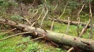 العلماء الروس يتمكنون من قياس سرعة تعفن أشجار الغابات