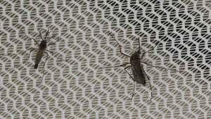 طرق طبيعية تُبعد الحشرات المزعجة عن منزلك