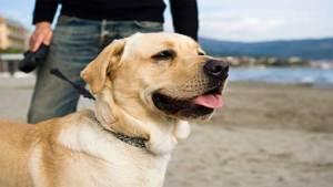 تحديد سلالة الكلاب الأخطر على الإنسان