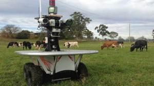 أستراليا تتجه للاستعانة بالروبوتات لرعي قطعانها