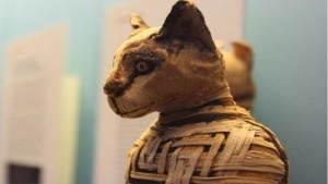 القطط غزت العالم من مصر