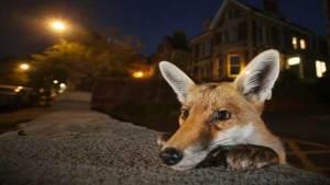 صور رائعة للحياة البرية