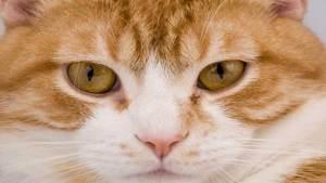 القطط تشكل تهديدا قاتلا لحياة الإنسان