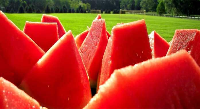 البطيخ.. ملك يروي ويشفي