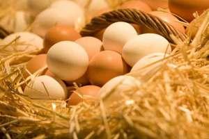 تعرف على أهم فوائد البيض