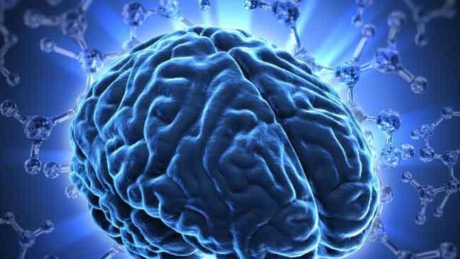 العلاقة بين التثاؤب وحجم الدماغ