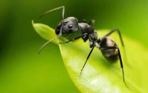 النمل قد يكون علاجاً لهذه الأمراض