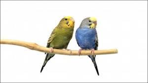 الاستعانة بتقنيات الطيور لتجنب الاصطدامات الجوية
