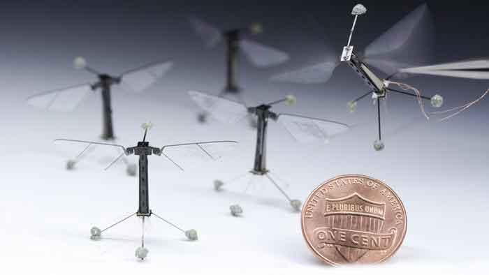 تطوير حشرة طائرة يمكنها أن تحط على مختلف الأسطح