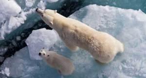 المناخ يتغير بسرعة تفوق قدرة الكائنات على التكيف