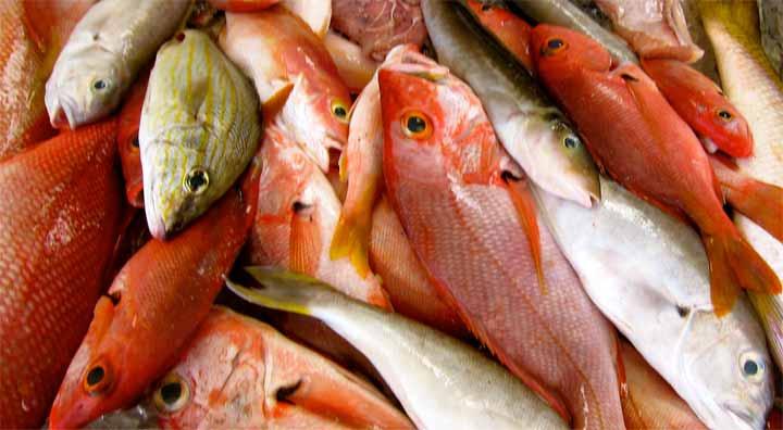 الأسماك الطازجة