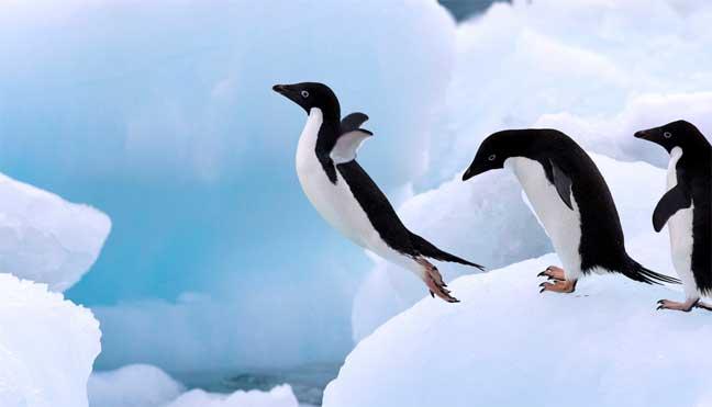 البطريق