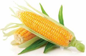 الذرة تقي من الأورام
