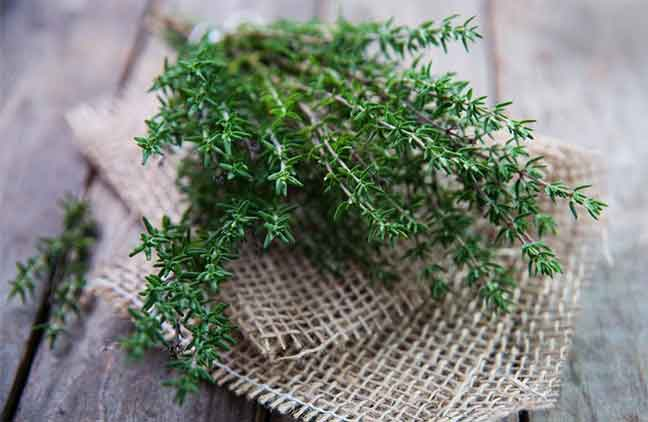 عالج نفسك بالنباتات وخاصة بالزعتر