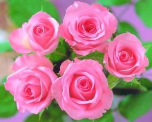 الورود أكثر من زينة وعطور