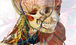 هناك 12 جزءا من جسم الإنسان يمكن العيش من دونها