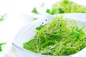 الأعشاب ... هل هي طب بديل ؟