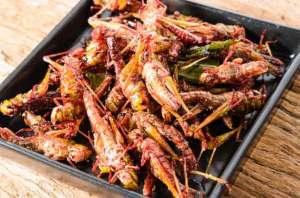 سوبر ماركت سويسرية تعتزم بيع أطباق الحشرات