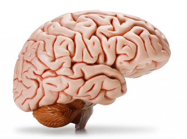 ثماني حقائق مثيرة لا تعرفها عن العقل البشري