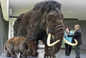 الكشف عن سبب انقراض آخر ماموث على الأرض
