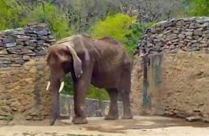 الفيلة الجائعة روبيرتا