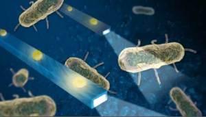 اختراع جديد يرصد حركة البكتيريا داخل الجسم