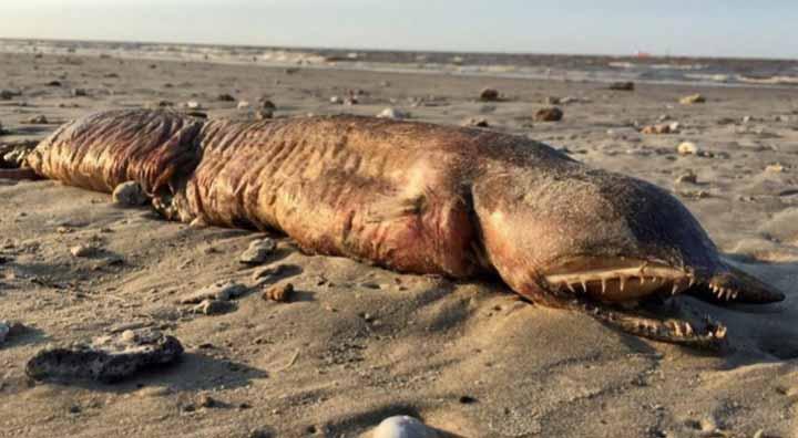 ظهور حيوان مرعب نافق على شاطئ تكساس بعد الإعصار
