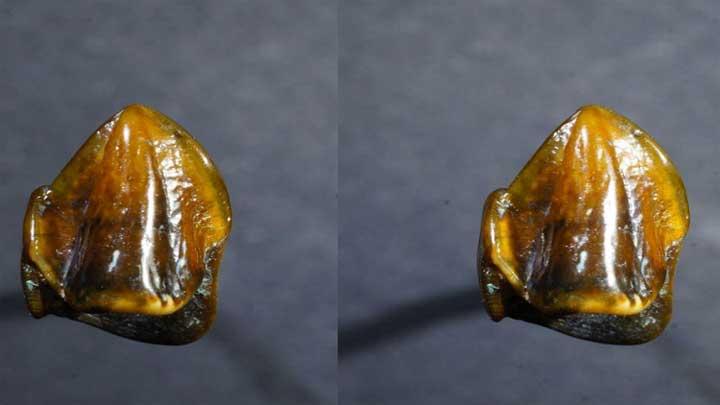 اكتشاف عمره 9.7 ملايين سنة قد يعيد كتابة تاريخ البشرية